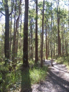 Daisy Hill State                           Forest
