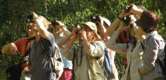 Intecol group birdwatching