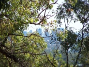 viewing                                                           Brisbane from                                                           Toohey Forest