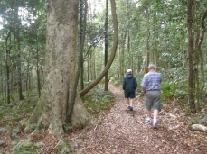 walking in the Bunya forest