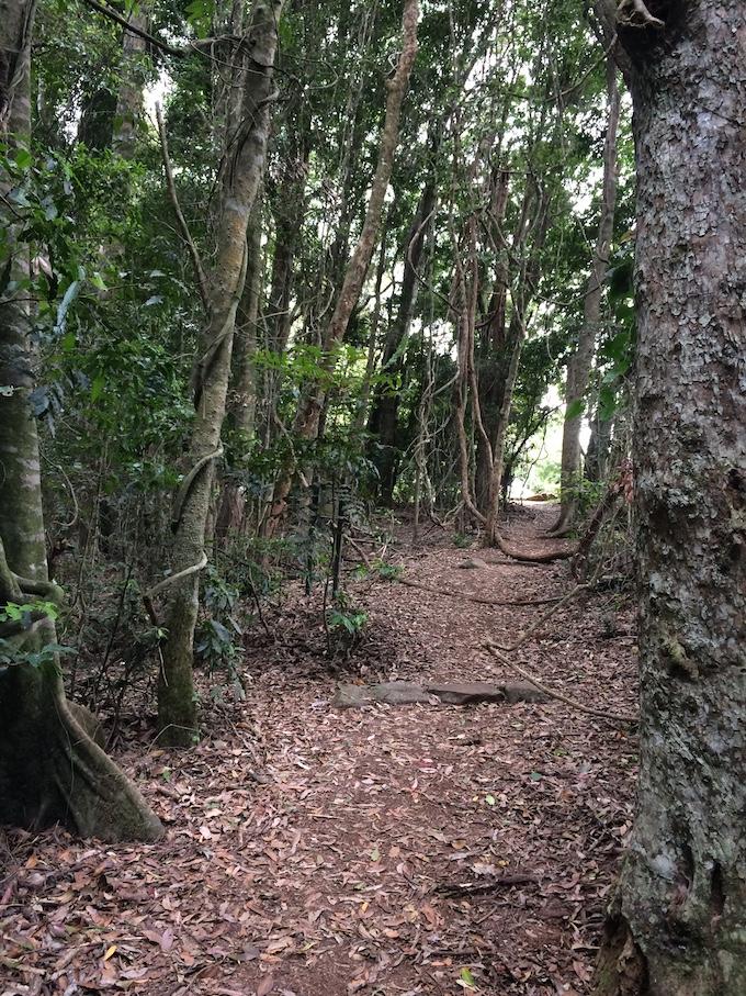 Rainforest at Binna Burra
